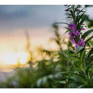 Alaska Fireweed At Sunset Jigsaw Puzzle Set